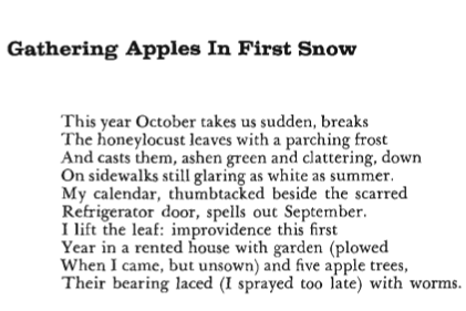GATHERING APPLES IN FIRST SNOW